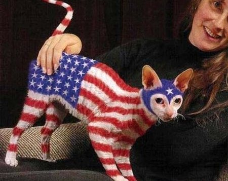 american flag on a cat, U.S. economy