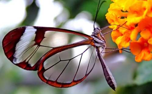 butterfly in garden