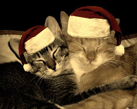 merry christmas cats 2009