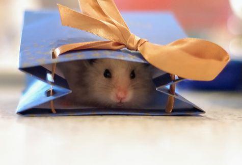 merry christmas hamster