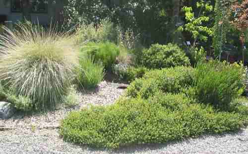 native plant garden