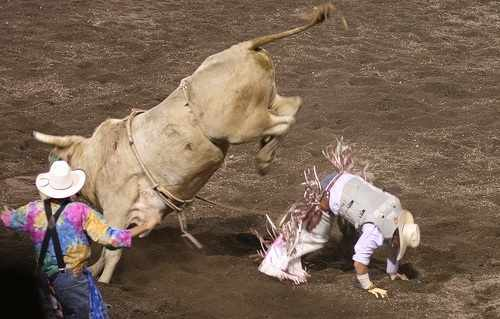 penny stocks, bull rider