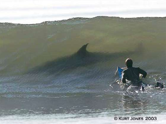 shark in a wave